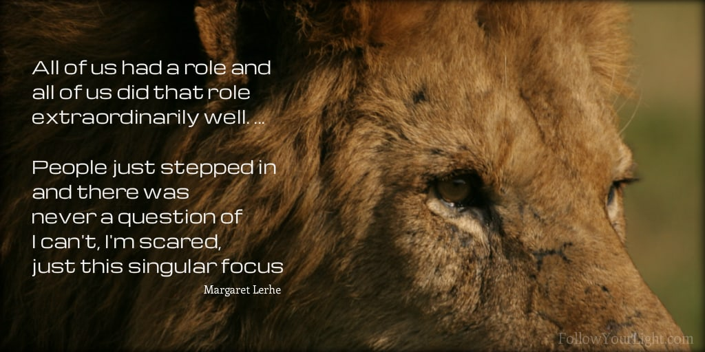 Close up of lion's eyes